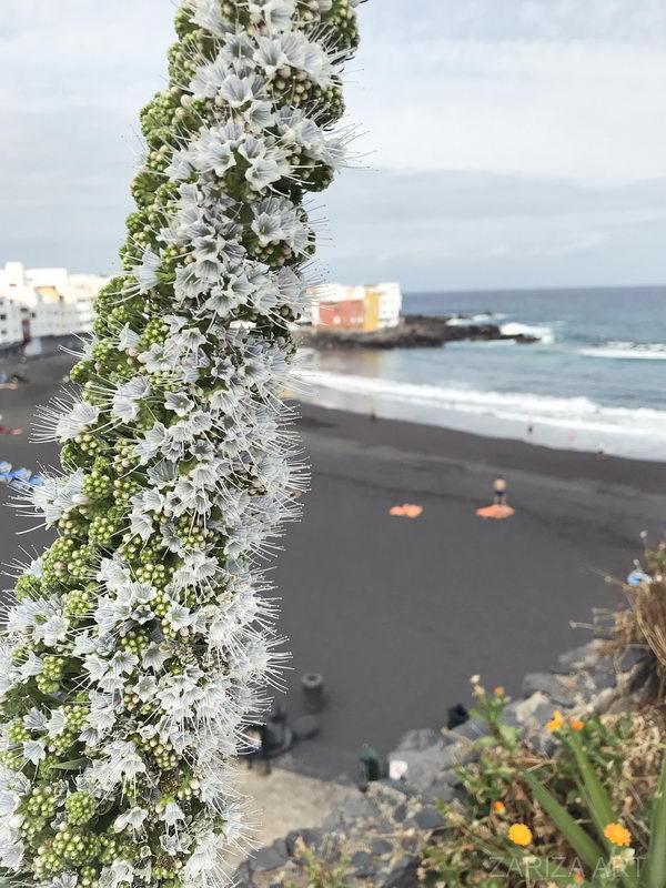 соцветие на острове тенерифе