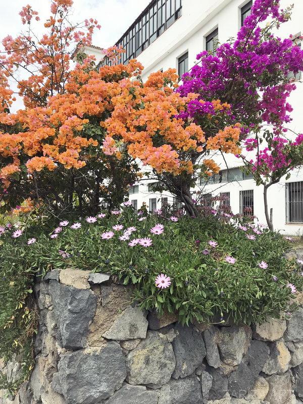 растения цветут